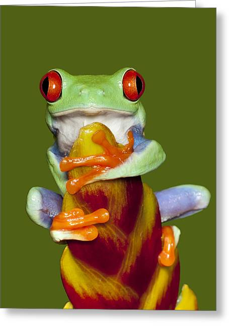 Tree Frog Photographs Greeting Cards - Red Eyed Delight Greeting Card by Janet Fikar