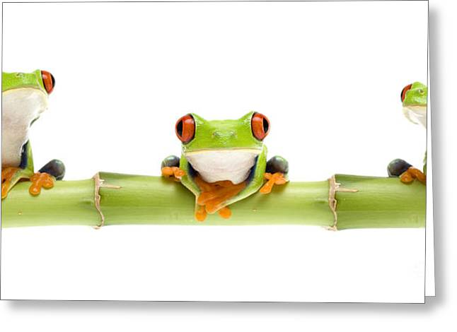 Treefrog Greeting Cards - Red-eyed Treefrogs Greeting Card by Mark Bowler and Photo Researchers