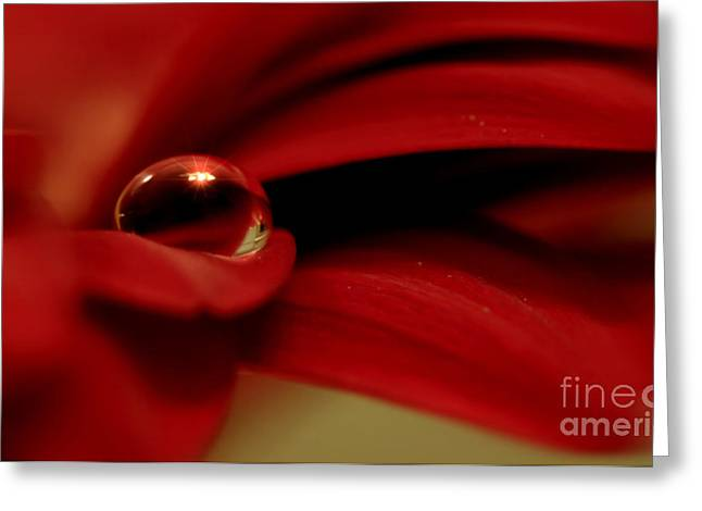 Red Flower With Drop Greeting Card by SK Pfphotography