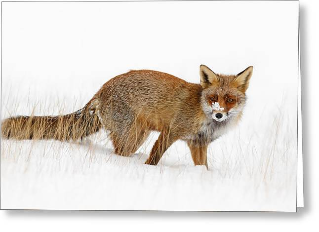Red Fox In A Snow Covered Scene Greeting Card by Roeselien Raimond
