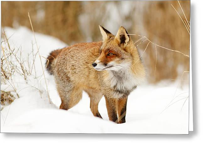 Red Fox Standing In The Snow Greeting Card by Roeselien Raimond