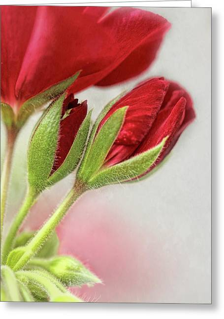 Red Geranium Flowers Greeting Card by Jennie Marie Schell
