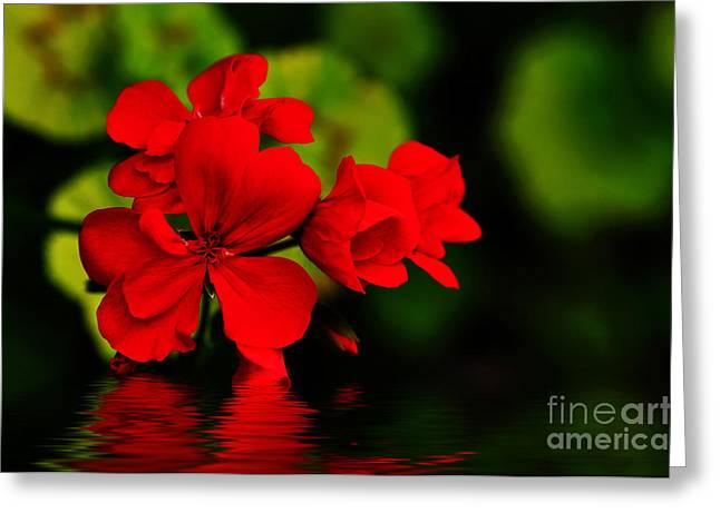 Red Geraniums Photographs Greeting Cards - Red Geranium on Water Greeting Card by Kaye Menner