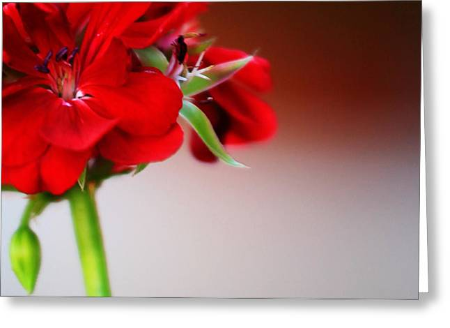 """flora Prints"" Greeting Cards - Red geranium Greeting Card by Toni Hopper"