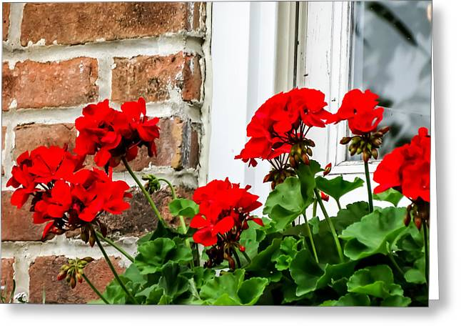 Red Geraniums Greeting Cards - Red Geraniums in a Window Box Greeting Card by Cynthia Woods