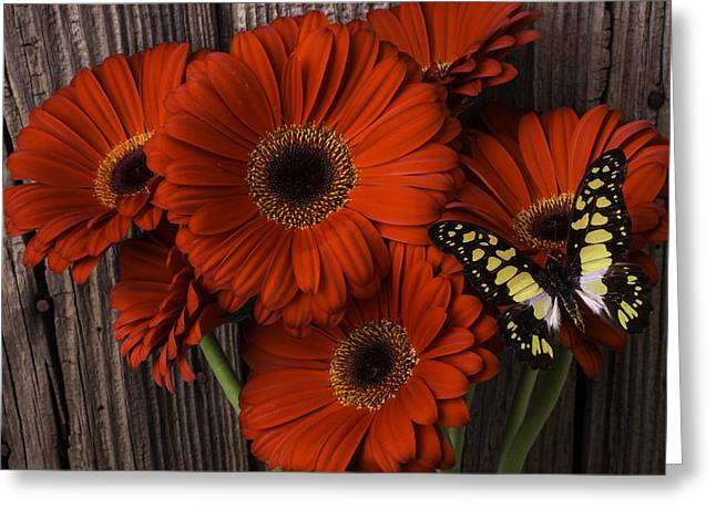Daises Greeting Cards - Red Gerbera Daisies With Butterfly Greeting Card by Garry Gay