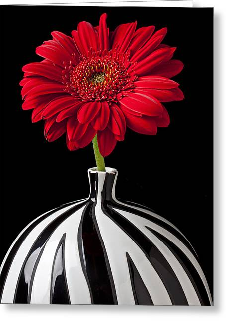 Flora Greeting Cards - Red Gerbera Daisy Greeting Card by Garry Gay
