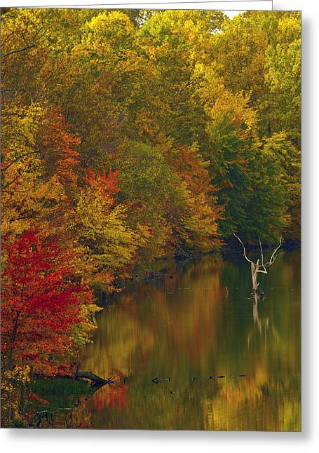 Germantown Greeting Cards - Red Gold And Green Greeting Card by Edward Kreis