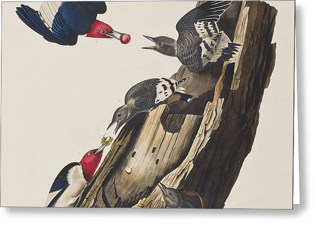 Tree Stump Greeting Cards - Red headed Woodpecker Greeting Card by John James Audubon