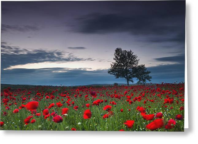 Dusk Greeting Cards - Red Hoods Greeting Card by Evgeni Dinev