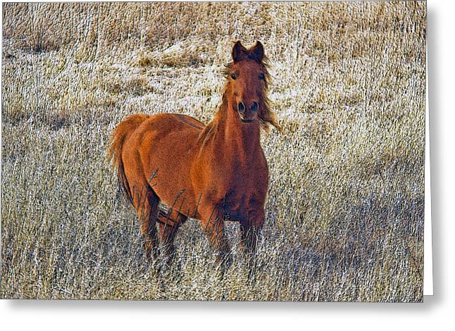 Horse In Field Greeting Cards - Red Greeting Card by James Steele