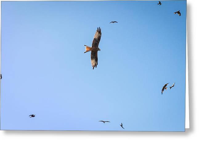 Kite Greeting Cards - Red Kites Greeting Card by Chris Dale