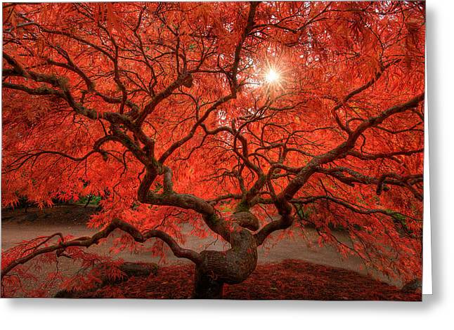Red Leaves Greeting Cards - Red Lace Greeting Card by Dan Mihai