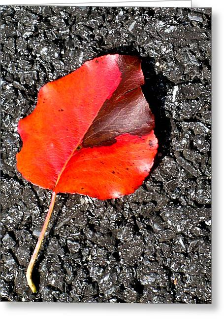 Red Leaves Greeting Cards - Red Leaf on Asphalt Greeting Card by Douglas Barnett