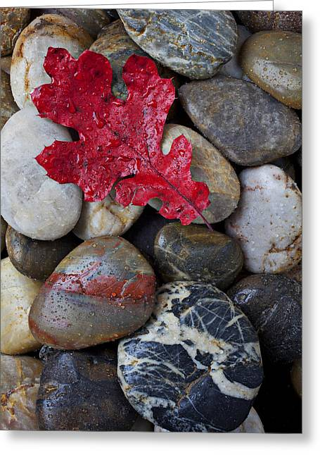 Colored Stones Greeting Cards - Red Leaf Wet Stones Greeting Card by Garry Gay