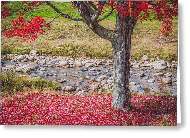 Reflecting Water Greeting Cards - Red Leaves Falling Greeting Card by Black Brook Photography