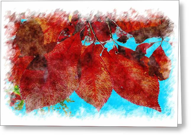 Shades Of Red Greeting Cards - Red Leaves Greeting Card by Jean Bernard Roussilhe