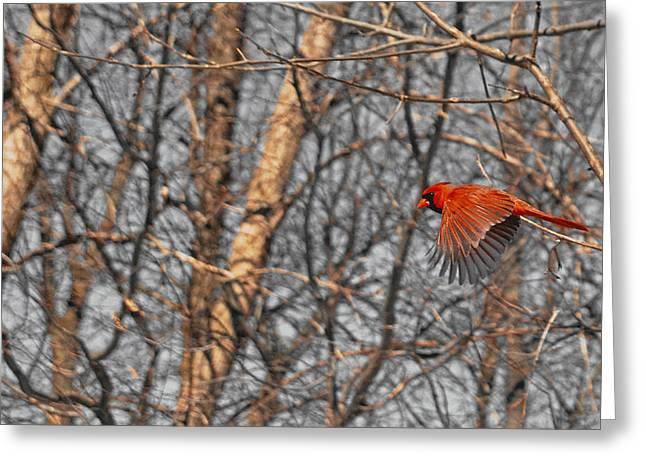 Red Like Cardinal In-flight Greeting Card by Asbed Iskedjian
