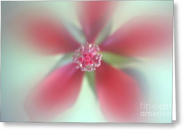 Red Macro Floral Art Greeting Card by Ella Kaye Dickey