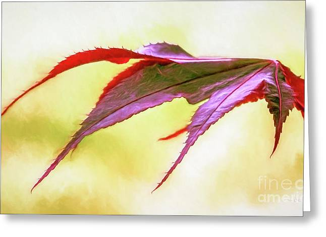 Concept Photographs Greeting Cards - Red Maple Leaf Greeting Card by Jean OKeeffe Macro Abundance Art