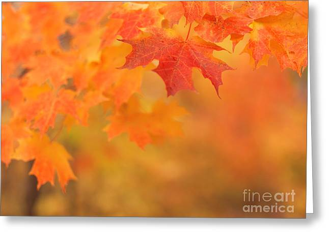 Red Maple Leaves Greeting Card by Oleksiy Maksymenko