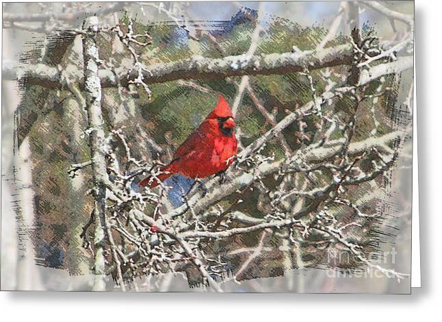 Bird Digital Art Greeting Cards - Red Neck Greeting Card by Robert Pearson
