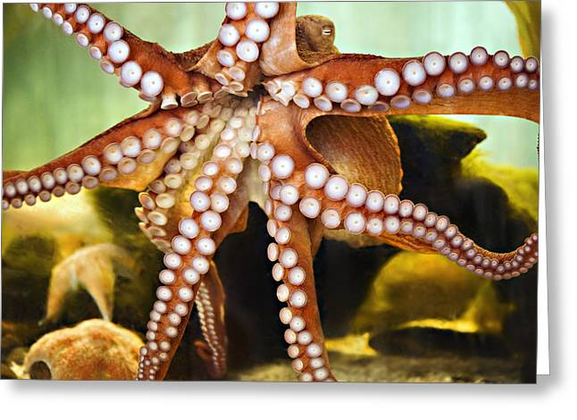 Aquarium Fish Greeting Cards - Red Octopus Greeting Card by Marilyn Hunt