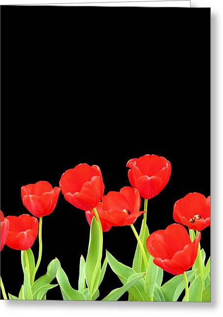 Isolated On Black Greeting Cards - Red on Black Greeting Card by Kristin Elmquist