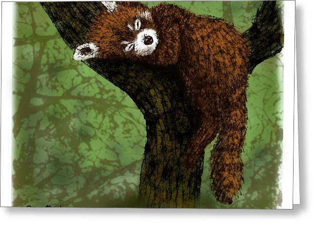 Red Panda Napping Greeting Card by Scott Rolfe
