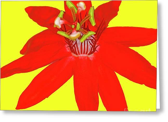 Red Passion Flower Greeting Card by Edita De Lima