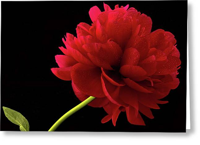 Red Peony  Greeting Card by Jean Noren