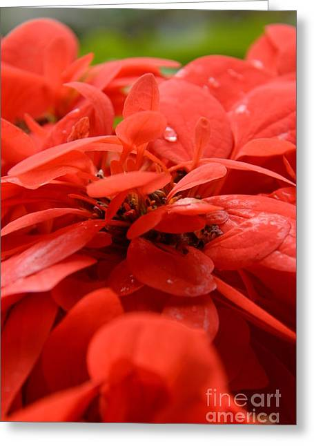 Petal Tapestries - Textiles Greeting Cards - Red Petals Greeting Card by Edna Weber