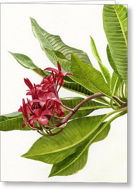 Frangipani Greeting Cards - Red Plumeria Blossoms Greeting Card by Sharon Freeman