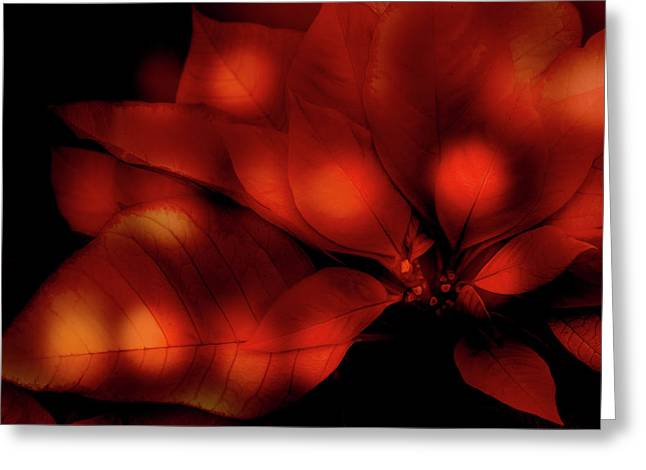 Red Poinsettia Greeting Card by Terry Davis