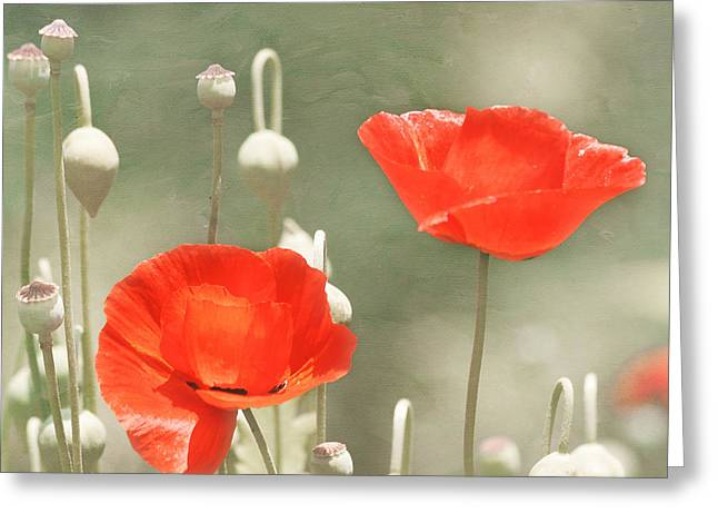 Red Poppies Greeting Card by Kim Hojnacki