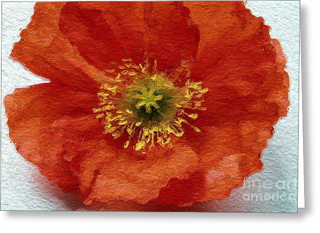 Big Mixed Media Greeting Cards - Red Poppy Greeting Card by Linda Woods