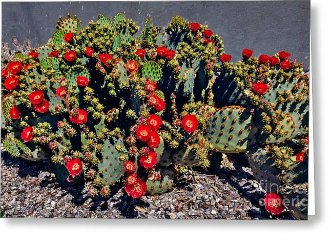 Mexican Flowers Greeting Cards - Red Prickly Pear Cactus Greeting Card by Robert Bales