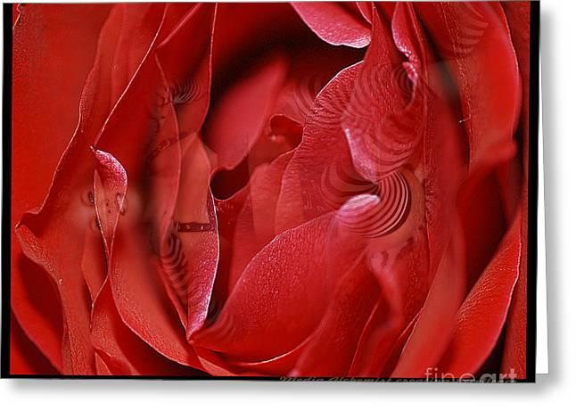 Bruster Greeting Cards - Red Red Rose Greeting Card by Clayton Bruster