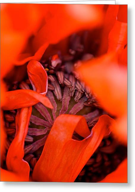 Oriental Poppy Greeting Cards - Red Ribbons Greeting Card by Lisa Knechtel