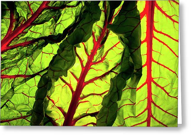 Lettuce Greeting Cards - Red River Greeting Card by Bobby Villapando