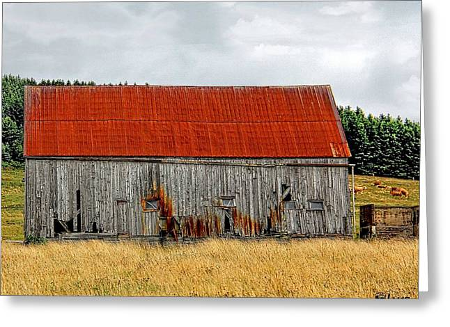 Red Roofed Barn Greeting Cards -  Nova Scotia Red Roof Barn  Greeting Card by Jake Steele