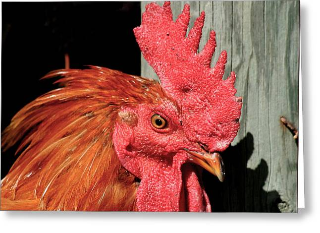 Weather Cock Greeting Cards - Red Rooster Greeting Card by Art Block Collections