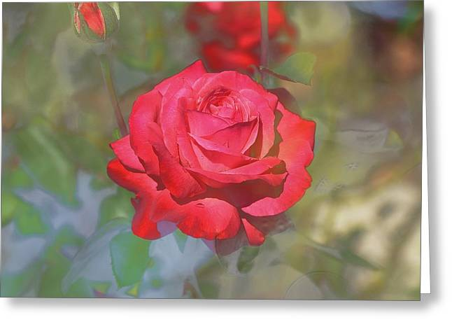 Red Rose Abstract I Greeting Card by Linda Brody