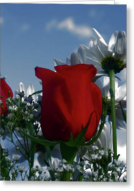 Babies Breath Greeting Cards - Red Rose and Daisies Greeting Card by Marjorie Imbeau