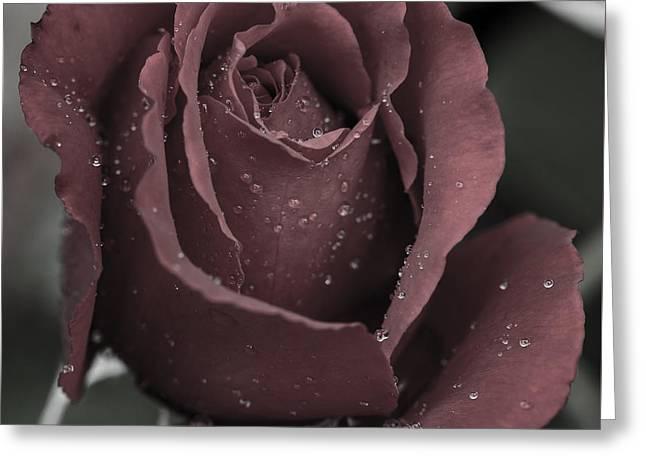 Rose Petals Greeting Cards - Red Rose and Raindrops 2 Greeting Card by Mo Barton