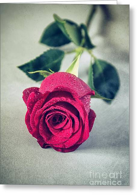 Wet Rose Greeting Cards - Red Rose Greeting Card by Carlos Caetano