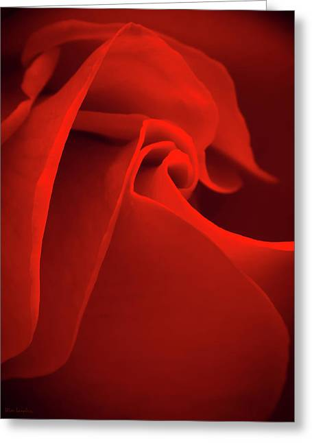 Signed Photographs Greeting Cards - Red Rose Macro Greeting Card by Wim Lanclus