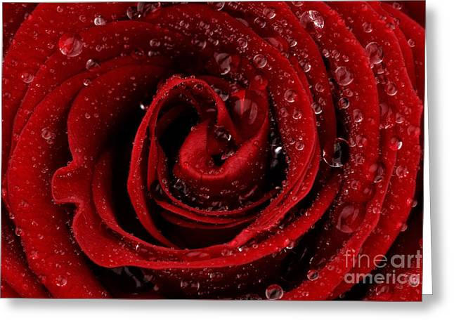 Red Rose Greeting Card by Mark Johnson