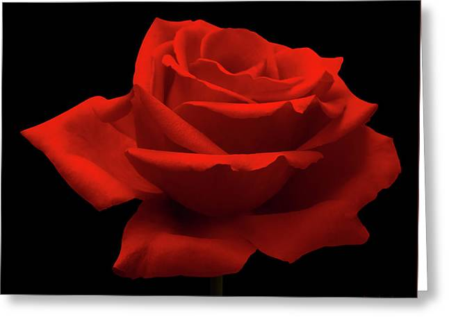 Red Rose On Black Greeting Card by Wim Lanclus