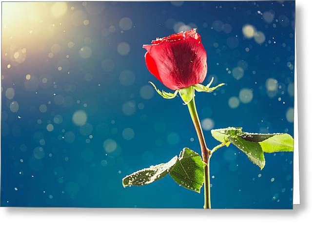 Red Rose On Snow Background Greeting Card by Valentin Valkov